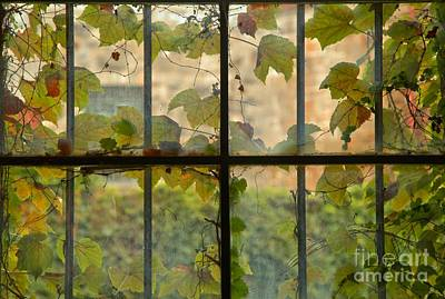 Photograph - Overgrown Jail Cell Windows by Adam Jewell