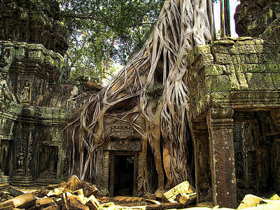 Photograph - Overgrown Jungle Temple Tree  by Ericamaxine Price