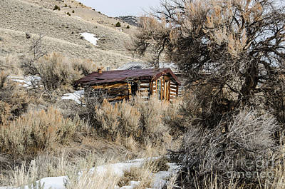 Bannack State Park Montana Photograph - Overgrown by Sue Smith