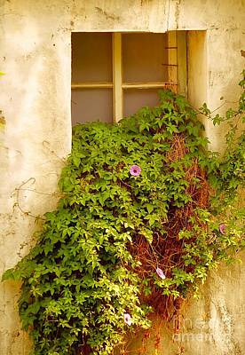 Photograph - Overgrown Window Of Old Building by Yali Shi