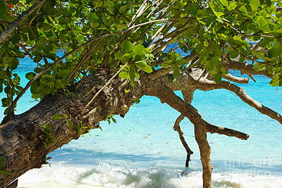 Beach Scenes Photograph - Overhanging by Kaye Menner