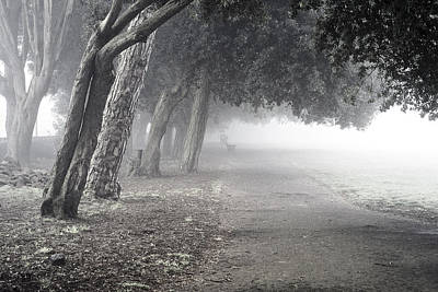 Photograph - Overhanging Trees by Christopher Rees