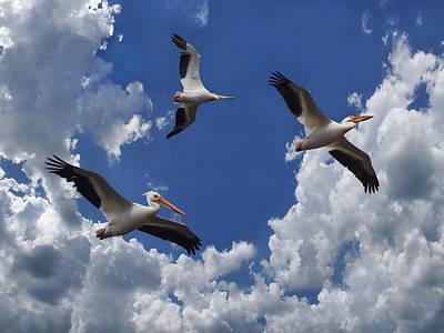 Photograph - Overhead by Leda Robertson