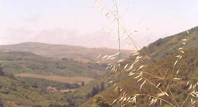 Art Print featuring the photograph Overlooking The Valley by Cynthia Marcopulos