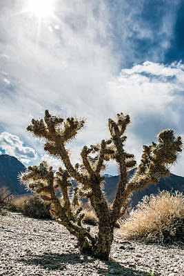 Art Print featuring the photograph Owens Valley Cholla by Jan Davies