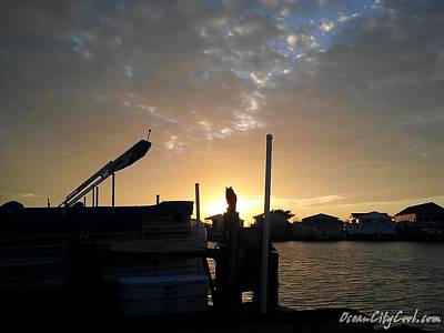 Photograph - Owl Admires Sunset by Robert Banach