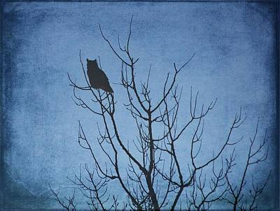 Photograph - Owl At Dawn - Blue by Diane Alexander