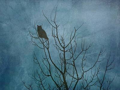 Photograph - Owl At Dawn - Teal by Diane Alexander
