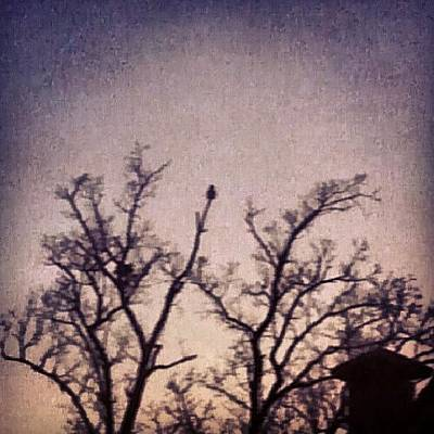 Skylines Wall Art - Photograph - Owl At Dusk by Genevieve Esson