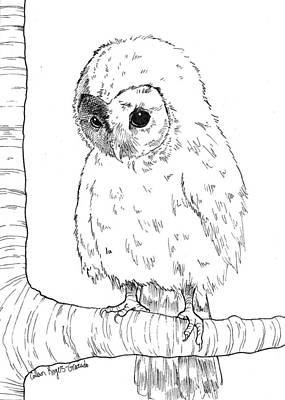 Barn Pen And Ink Drawing - Owl Baby by Callan Rogers-Grazado