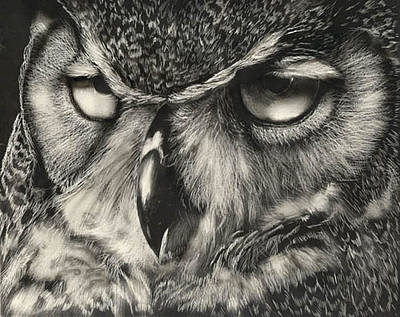 Great Horned Owl Drawing - Owl by Bill Dykes