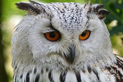 Art Print featuring the photograph Owl Bird Animal Eagle Owl by Paul Fearn