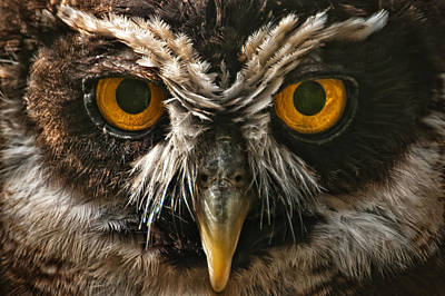 Owl Art Print by Chris Boulton