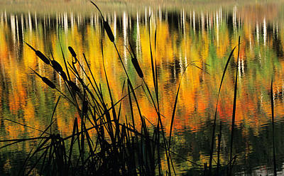 Art Print featuring the photograph Owl Creek Pass Fall 3 by Susan Rovira