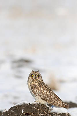 Photograph - owl by Dragomir Felix-bogdan