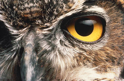 Photograph - Owl Eye by Hans Halberstadt