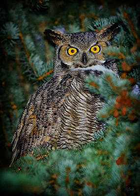 Photograph - Owl Eyes by Greg Norrell