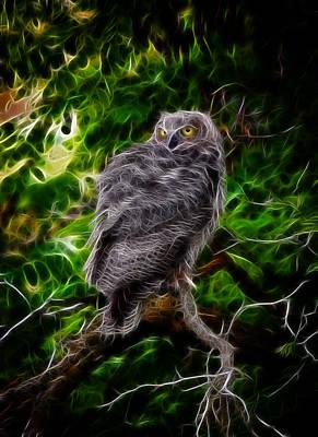 Photograph - Owl Flames by Steve McKinzie
