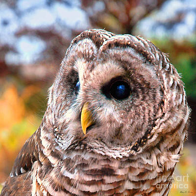 Photograph - Owl Gaze by Adam Olsen