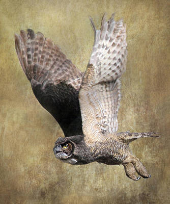 Photograph - Owl In Flight by Angie Vogel