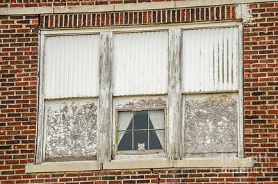 Photograph - Owl In The Window by Sue Smith