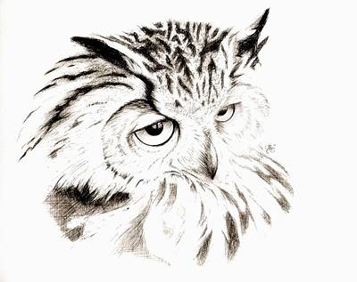 Drawing - Owl In Thought by Scarlett Royal