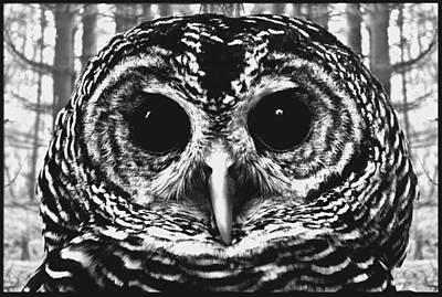 Owl Digital Art - Owl In Woods by Fred Leavitt