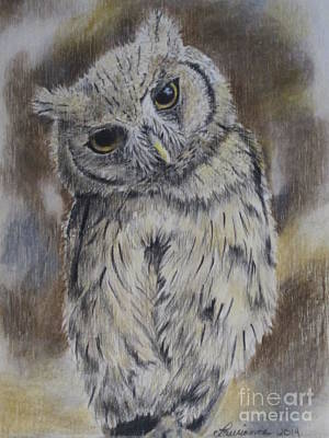 Yellow Beak Drawing - Owl by Laurianna Taylor