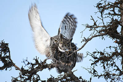 Photograph - Owl Love by Ted Raynor