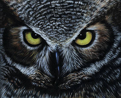 Drawing - Owl by Natasha Denger