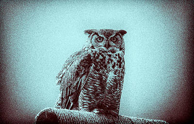Photograph - Owl On Perch by Tony Grider