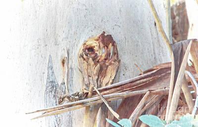Digital Art - Owl One With The Wood by Georgianne Giese