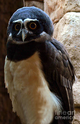 Photograph - Owl Pal by Elizabeth S Zulauf
