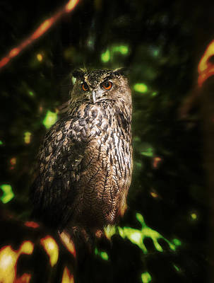 Photograph - Owl by Patrick Boening