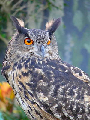 Photograph - Owl Portrait - The Eyes Have It by Charlie and Norma Brock