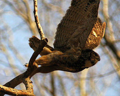 Photograph - Owl Take Off by Raymond Salani III