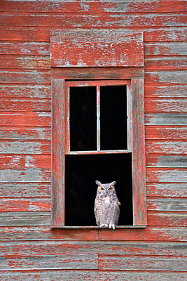 Owl Window Art Print by Leland D Howard