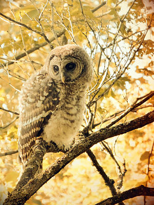 Photograph - Owlet Pensive Vintage by Laurie Tsemak