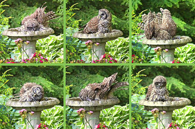 Photograph - Owls Do Take Baths by Jennie Marie Schell