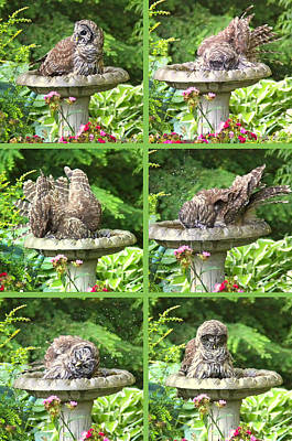 Photograph - Owls Do Take Baths Vertical by Jennie Marie Schell