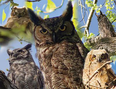 Owls Of Lac Lawrann Art Print by Matt Steffen