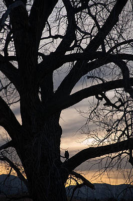 Photograph - Owls Roost by Eric Rundle