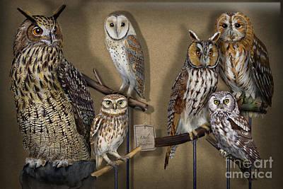 Owls - Show-case Collection - Chouettes - Hiboux - Lechuzas - Mochos - Strigiformes Strigidae Art Print
