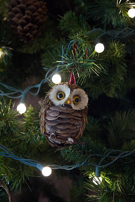 Palm Trees Rights Managed Images - Owly Christmas Royalty-Free Image by Patricia Babbitt