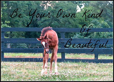 Photograph - Own Kind Of Beautiful by Holly Mathis
