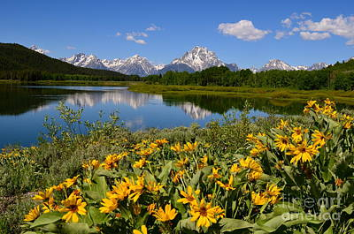 Photograph - Oxbow Bend Splendor by Johanne Peale