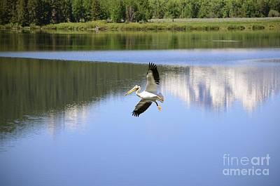 Photograph - Oxbow Landing by Johanne Peale