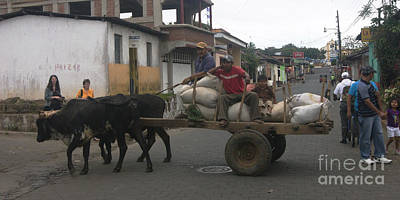 Photograph - oxen carriage in Nicaragua by Rudi Prott