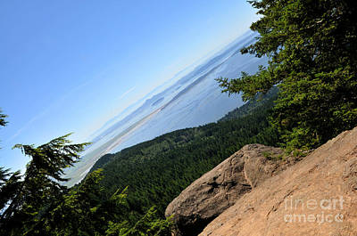 Photograph - Oyster Dome by Rebecca Parker