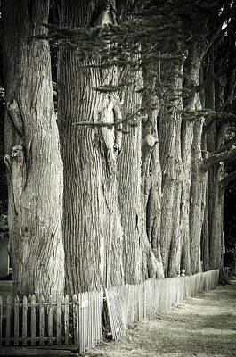 Photograph - Oysterville Trees by Craig Perry-Ollila